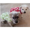 Corkie_and_Tappan_Zee_in_their_green_and_red_dot_Fleece__Sweaters