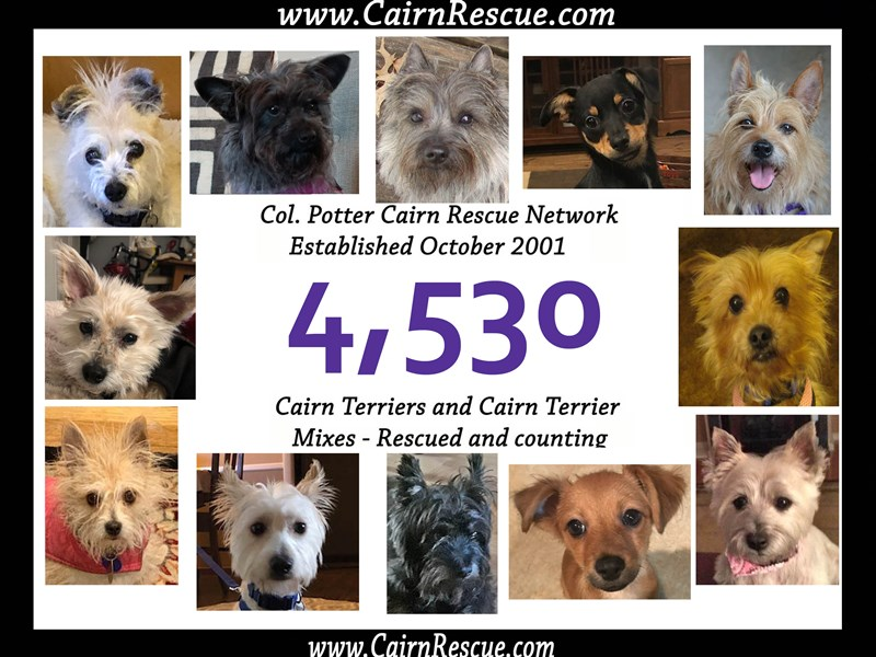 Col Potter Cairn Rescue Network Cairnrescue
