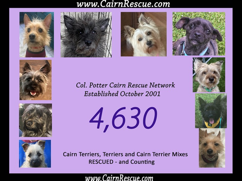 Col  Potter Cairn Rescue Network | Cairnrescue