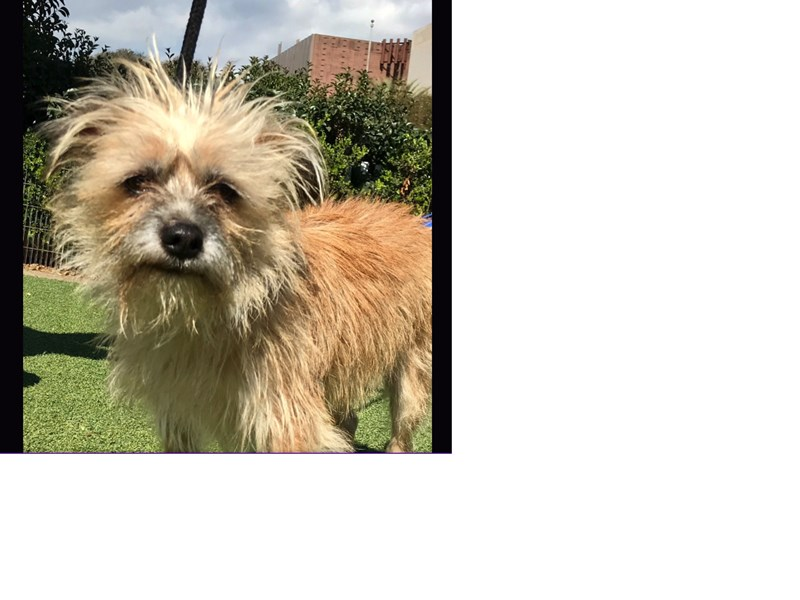 Cairn Terriers Outside of Col  Potter - Rescue | Cairnrescue